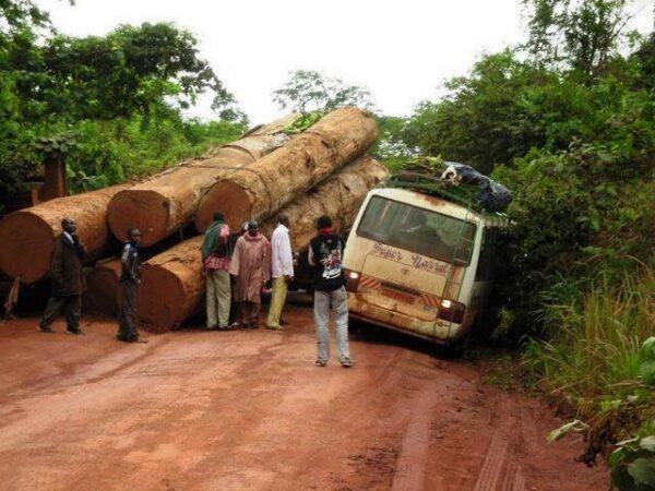 Où va donc l'argent produit par le bois camerounais ?